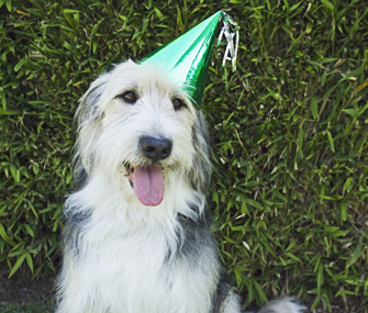 Dog in Party Hat