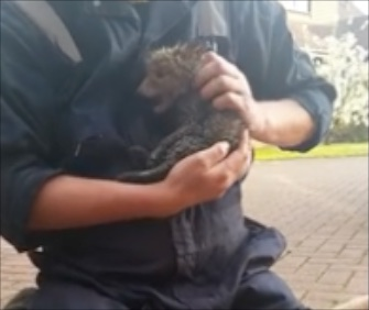 A fox cub was reunited with his mom after being saved from a drainpipe.