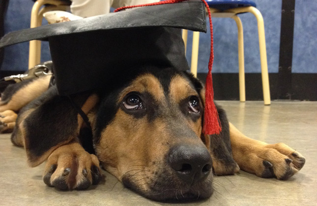 Puppy with a graduation hat