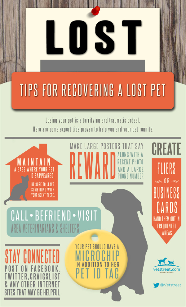 Infographic Gives Tips for Finding Lost Pets
