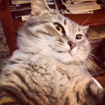 Selfie Cat Closeup