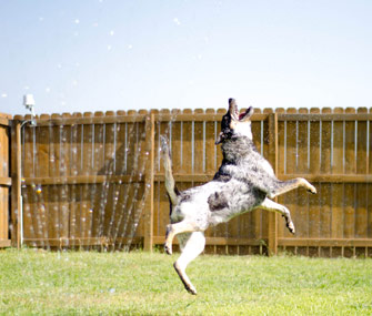 Dog in Sprinkler Cute Pet Jack