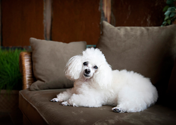 Toy Dog Breeds Pictures And Names : A veterinarian names the longest living dog breeds