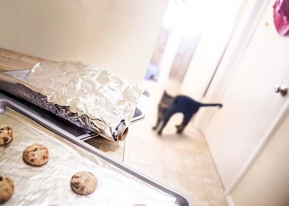 Things in the Home That Scare Pets Aluminum Foil