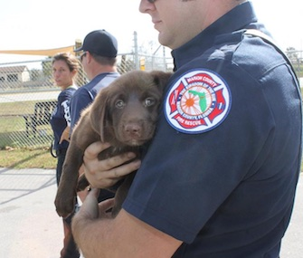 Firefighters in Ocala, Florida, rescued an adorable puppy from a culvert Tuesday.