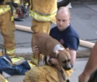 Stella, a Boxer, was pulled from a fire and revived by firefighters in California.