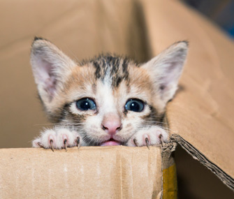 Kitten in a cardboard box
