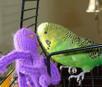 Disco the talking parakeet
