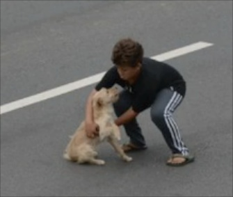 Jean Fernandes, 11, stopped traffic to rescue an injured dog in Brazil.