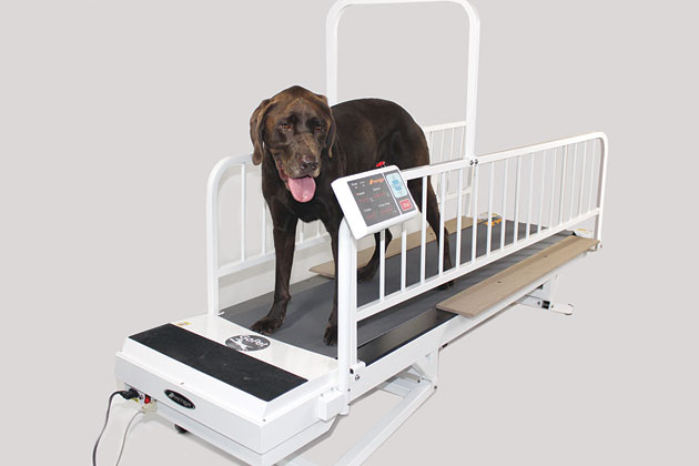 Go Pet Treadmill