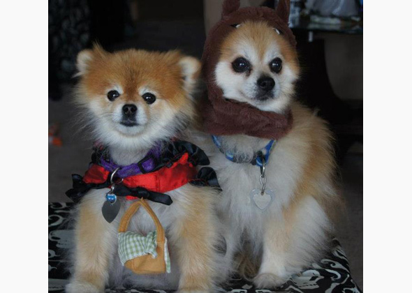 Dogs as Little Red Riding Hood and Wolf