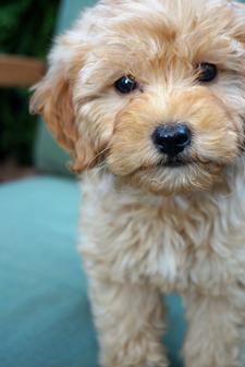 Author John Searles' dog Ruby