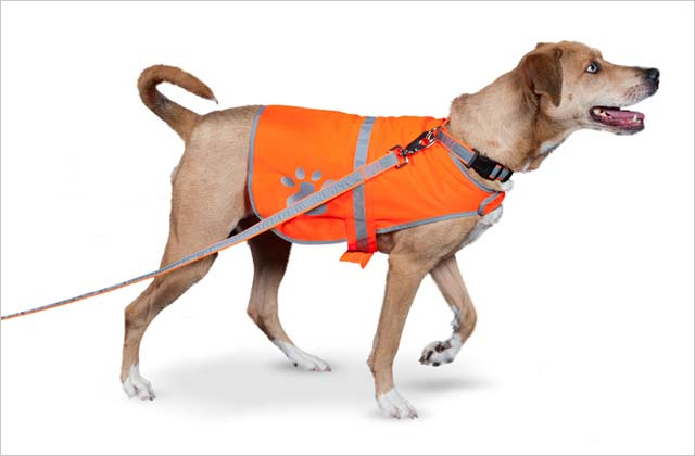 Wise Investment #3: Outfit Fido in Reflective Gear