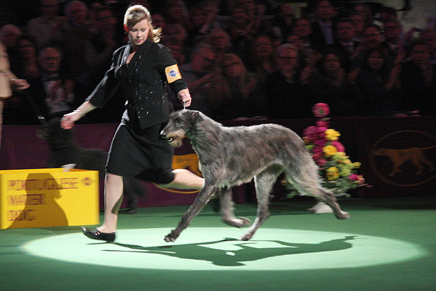 America's Dog Show