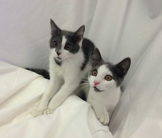 Alfonso and Louis will hit the stage on Broadway — and hopefully find a forever home.