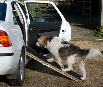 Dog Ramp For Car >> Teach Your Senior Dog to Use a Ramp or Stairs