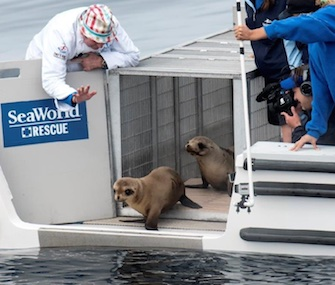 Marine Room Chef Bernard Guillas was on board to see Marina off when she was released.