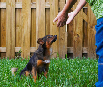 Owner greeting dog