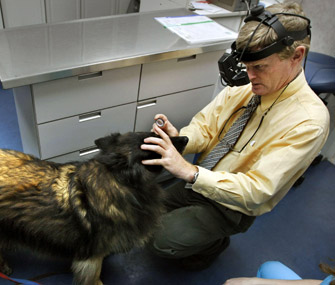 Dog Eye Exam
