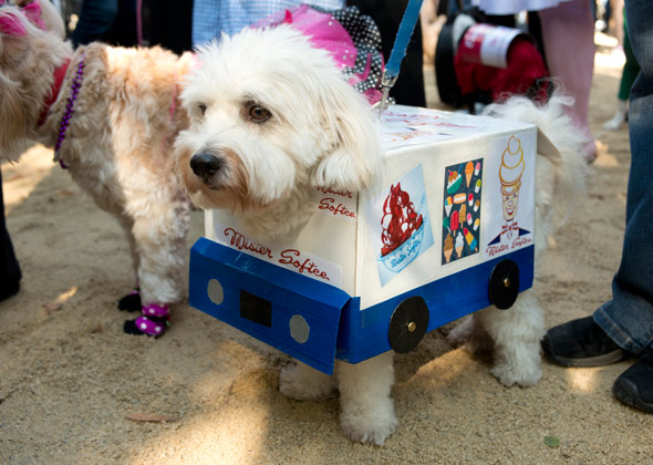 Dog Halloween Parade Mister Softee