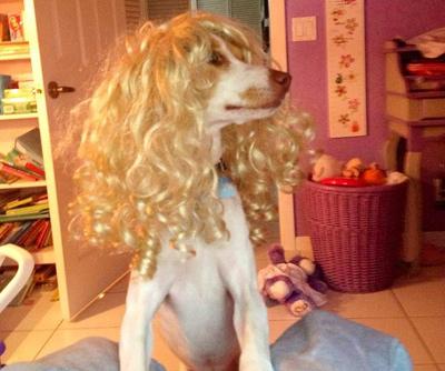 Dog Wearing Wig