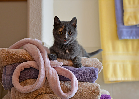 Kitten playing on towels.