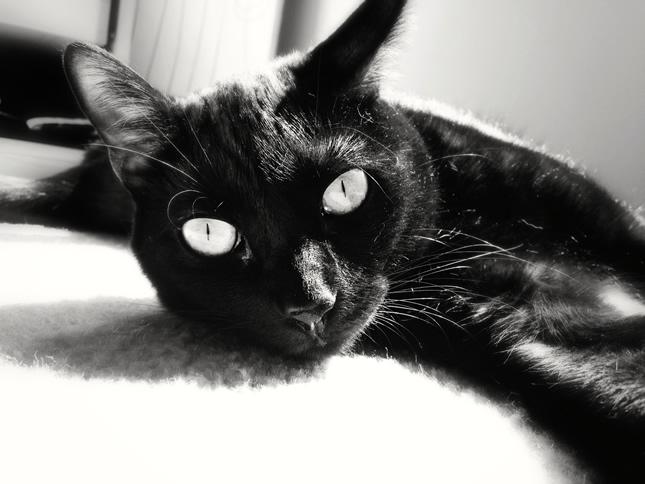 black cat lounging