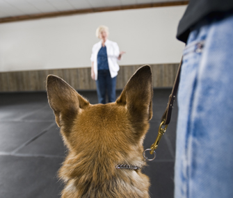 Dog and owner at the trainer