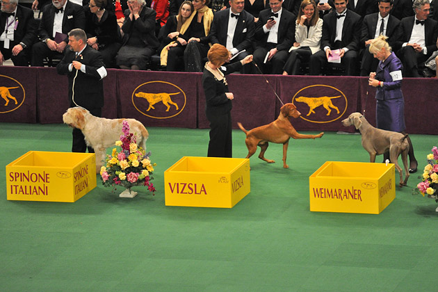 Two dogs play during the group judging