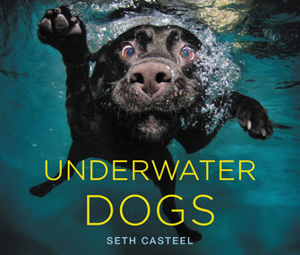 Image result for underwater dogs casteel book cover