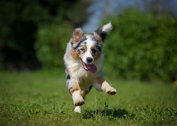 7 Of The Best Dog Breeds For Living In The Country