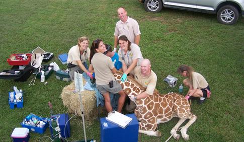 giraffe and zoo techs