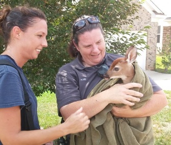 Firefighter Holly Holton, left, helped rescue a fawn from a 12-foot storm drain in North Carolina.