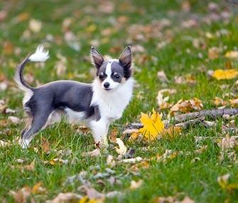 Dog alone in yard