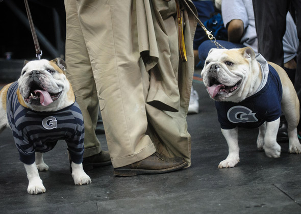 Georgetown Bulldogs