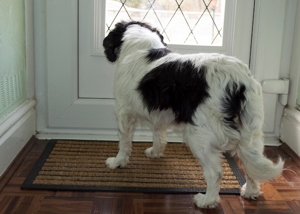 5 Tips To Solve Your Dog S Barking Problem