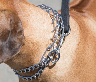 How To Train Dog With Prong Collar