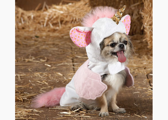 Top Paw unicorn costume