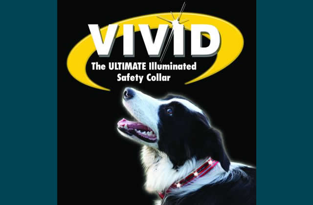 The Company of Animals Vivid Flashing Collar