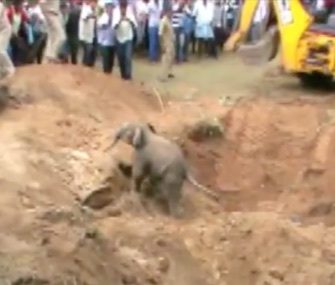Villagers in southern India cheered as a baby elephant climbed out of the well where he had been trapped.