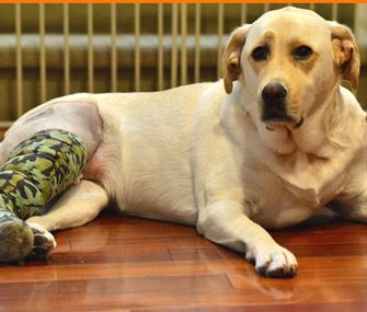 Dog wearing cast on leg