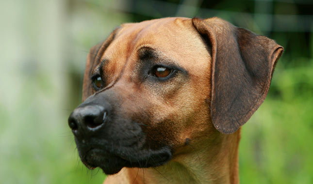 Dog Breeds With Black Spots In Mouth