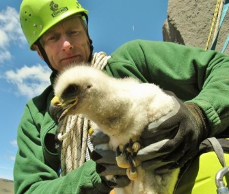 David Shepherdson of the Oregon Zoo rappelled down a 70-foot cliff to take a blood sample from golden eaglets.