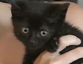 Jade the kitten was rescued from a Virginia road