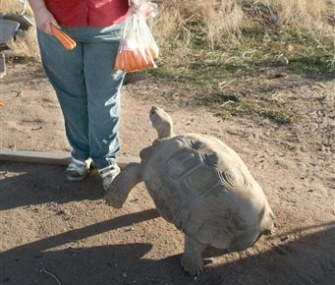 Mary Plumb feeds her tortoise carrot treats after being reunited with him in Arizona.