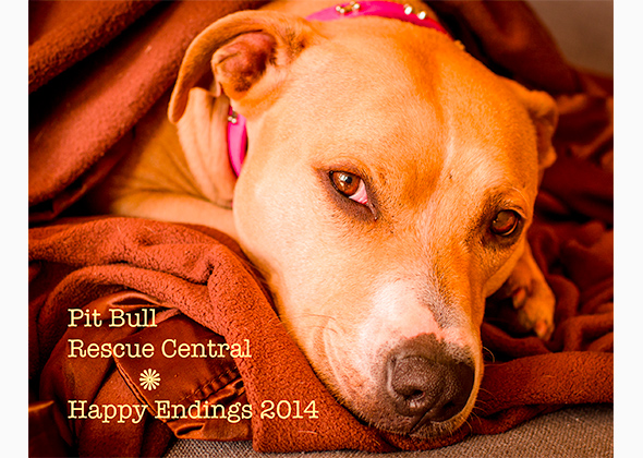 Pit Bull Rescue Central Happy Endings Calendar