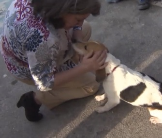 Sassy the Beagle was reunited with her owners after 17 months away from home.