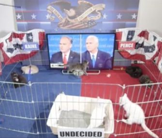 Ten adoptable kittens took part in a Late Show focus group to see their reaction to the vice presidential debate.