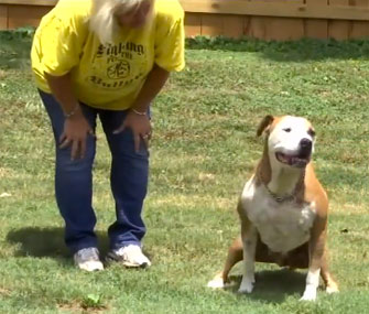 Hero Pit Bull saves woman from attacker