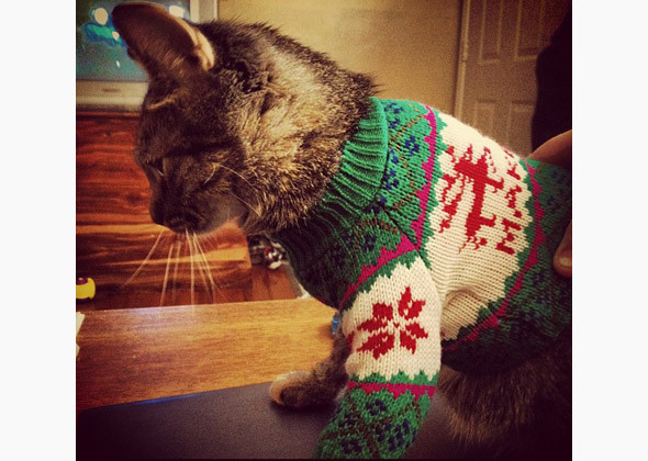 cat in green, red, and white sweater